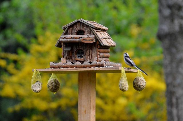 ptáci při krmení